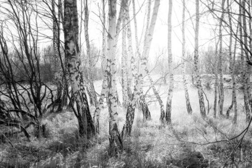 Fotokunst af Birkeskov