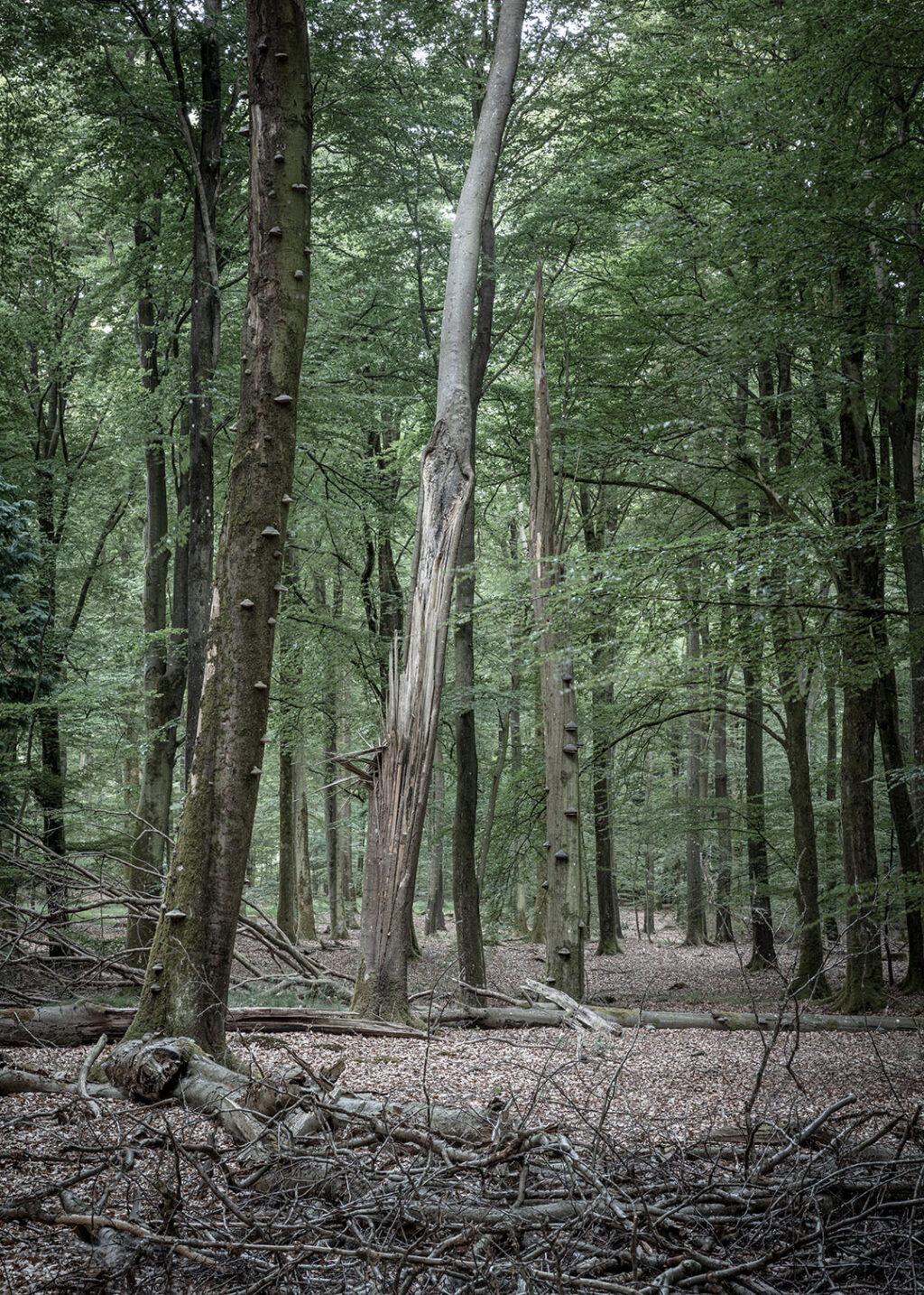 Vesterskoven plakat