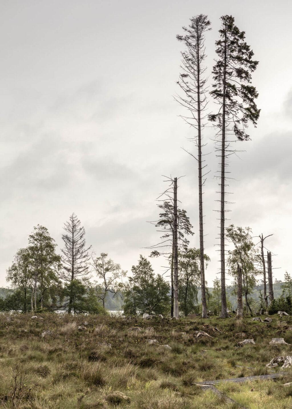 Skovsø plakat