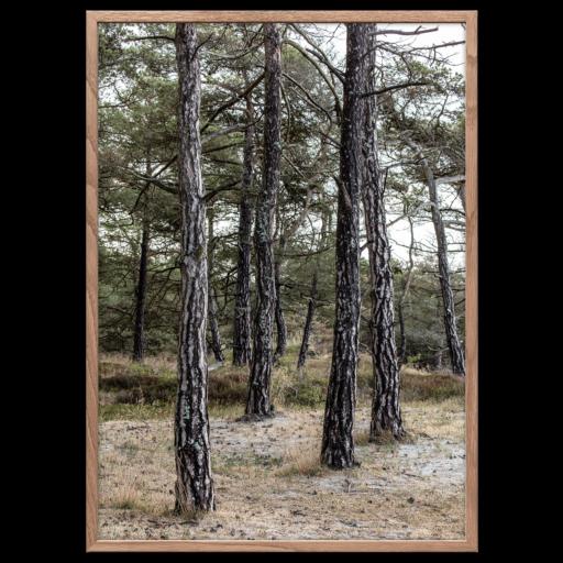Fyrretræerne plakat