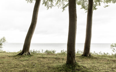 Naturen på Møn og Møns Klint