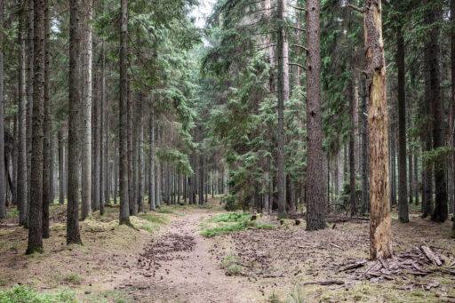 Nordskoven Fotokunst