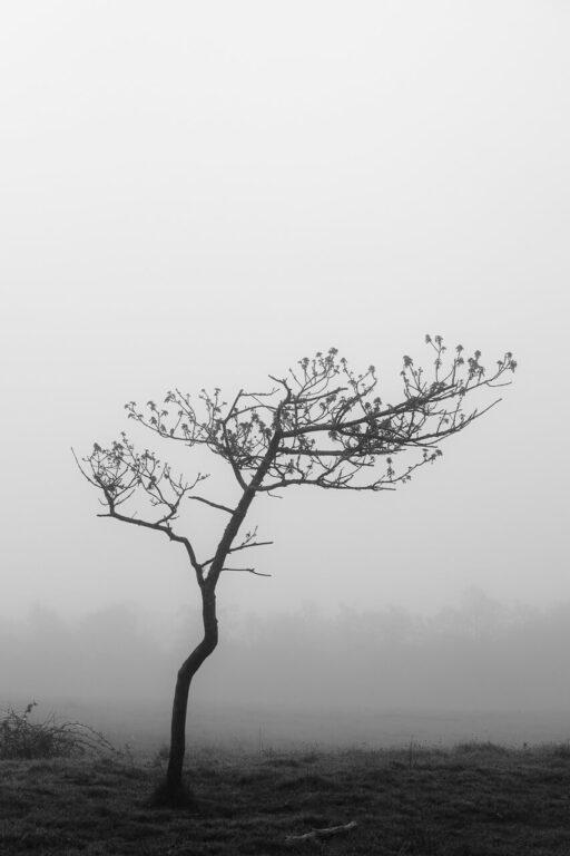 Fotokunst af ensomt træ